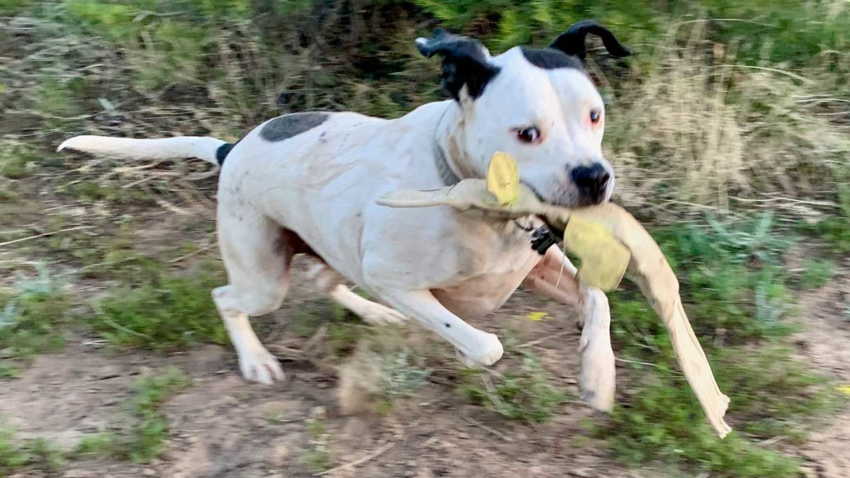 Enzo running with snake toy