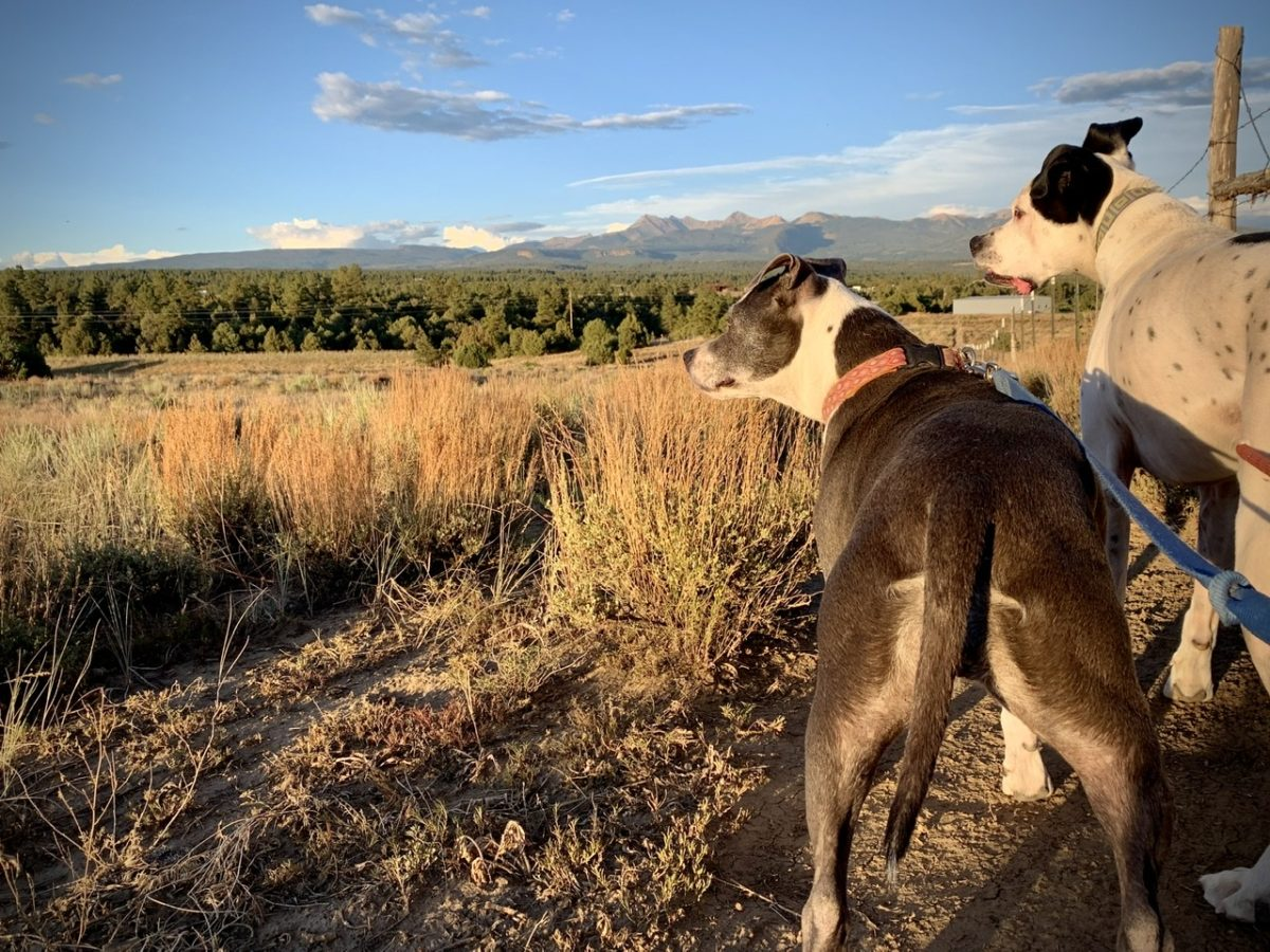 Dogs looking at mountain sunset