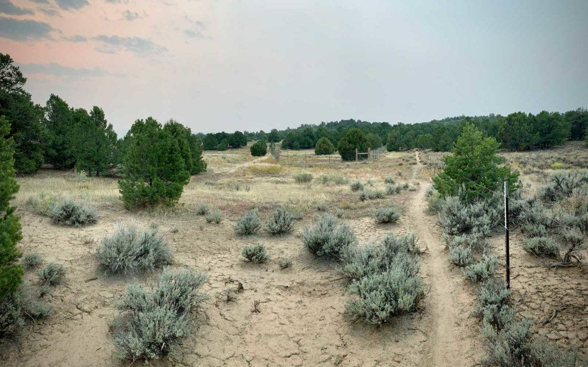 South West Corner of Grassland
